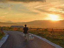 Hombre pasea con perro sobre una pista durante el atardecer