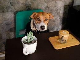 Perrito posando para Culto Perro café