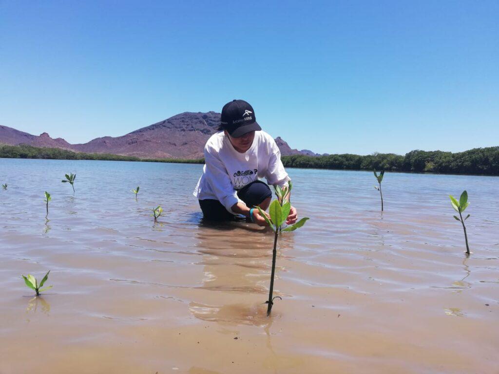"""Estudiante reforestando manglar en """"Estero El Soldado"""""""