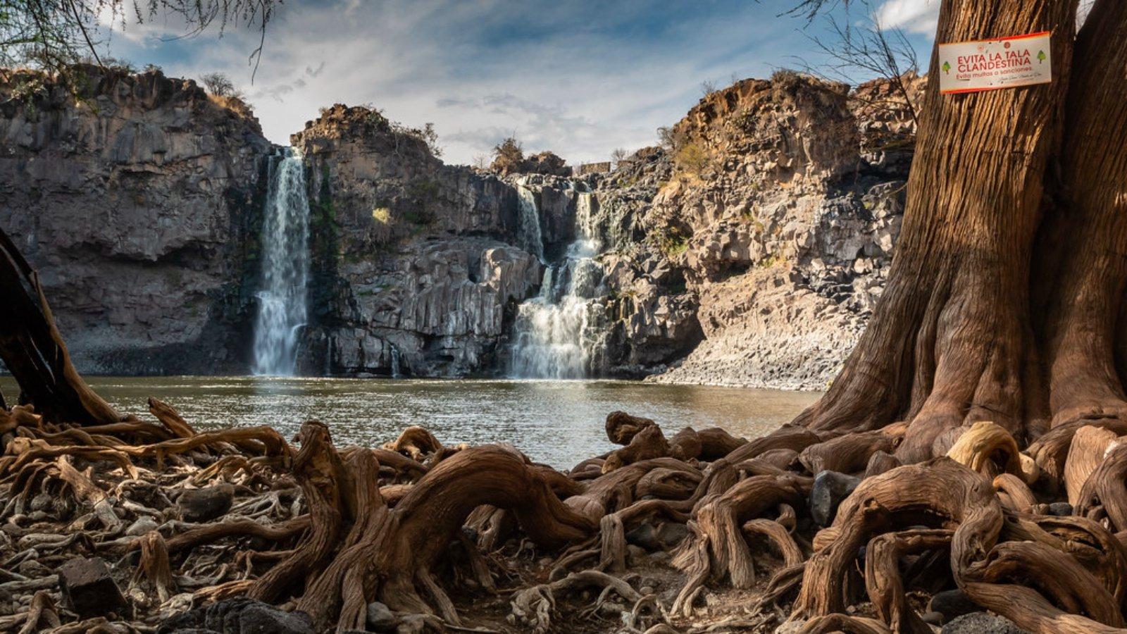 Pueblo mágico del noroeste. Ojo de agua gigante. En la parte de abajo se pueden observar las raíces gigantes que sobresalen de los árboles color café.
