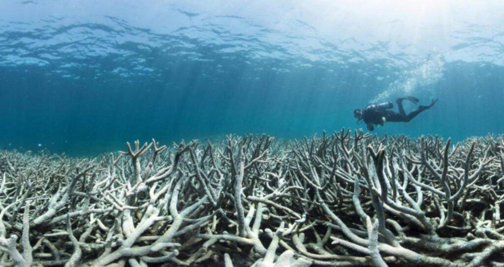 Océano ácido a causa de cambio climático según Organización Meteorológica Mundial.