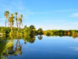 estero san josé del cabo con agua y palmeras verde, cielo azul