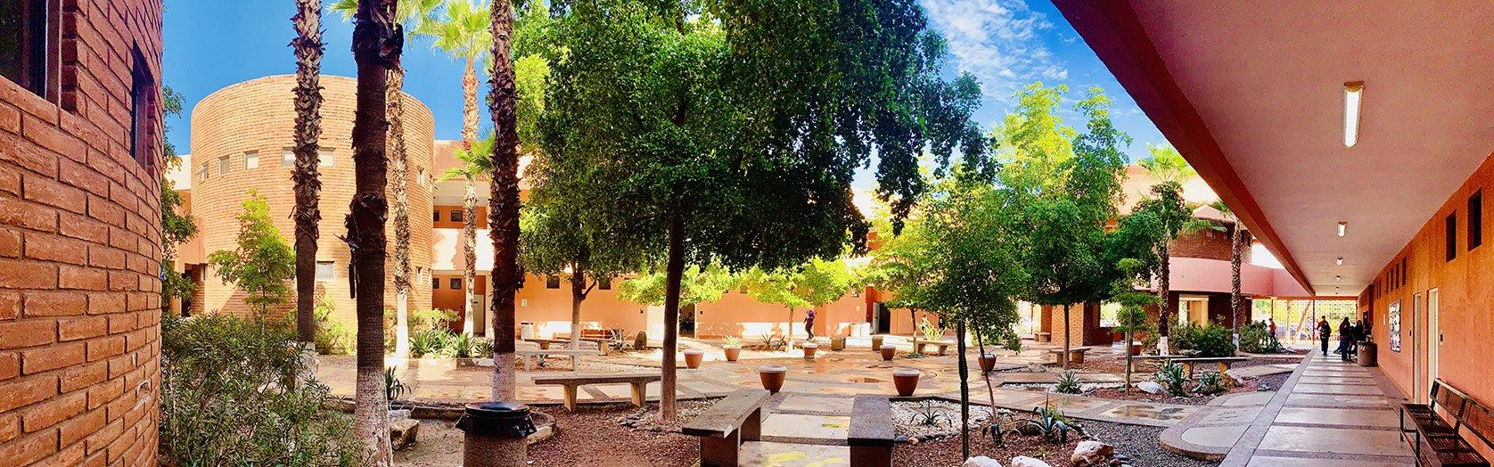 Patio Central de la Universidad de Sonora.  Edificios naranjas y en el centro árboles y palmeras