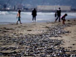 Orilla del mar en Playa Hermosa, Ensenada