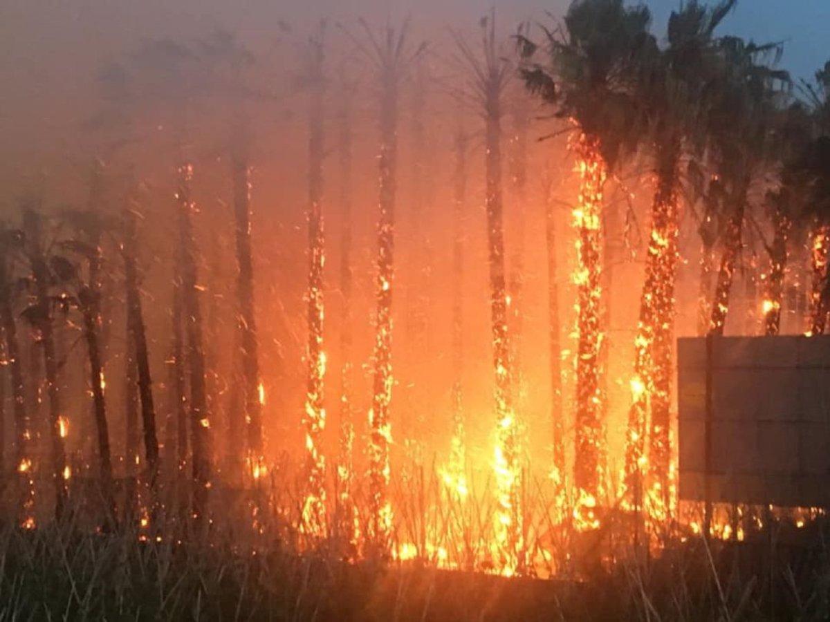 Palmeras incendiadas
