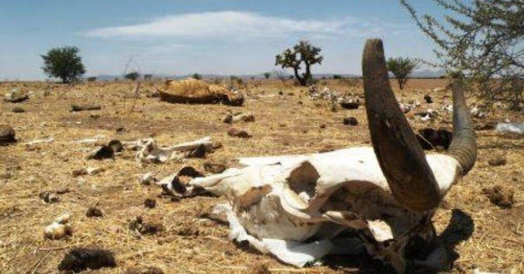 Sequía causa muerte de ganado