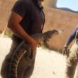 Bombero sosteniendo cocodrilo