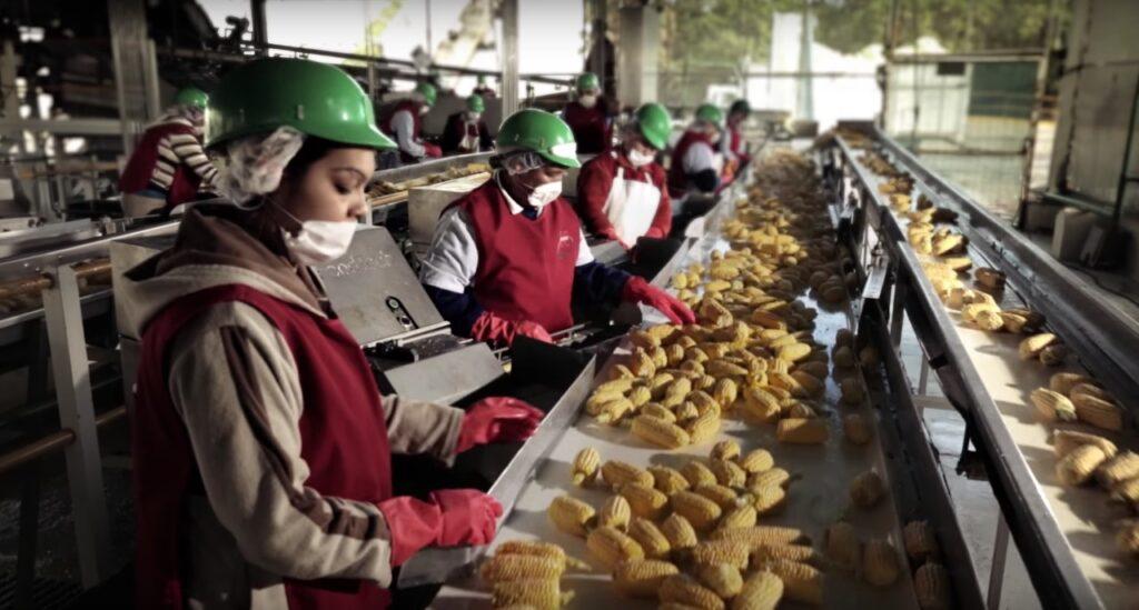 Trabajadores en estado de Sinaloa