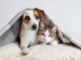 Perro y gato siendo amigos