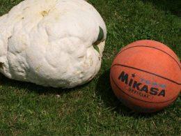 balón naranja de baloncesto que dice MIKASA al lado de un hongo gigante de color blanco