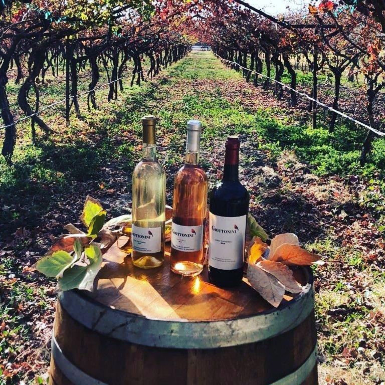 Tres presentaciones de vino Giottinini
