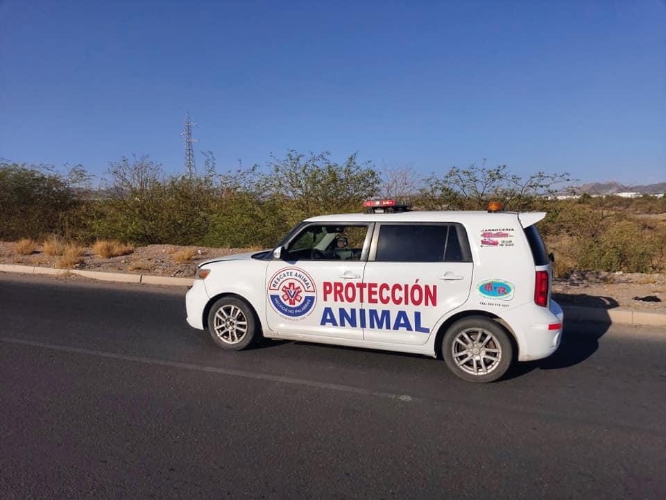 Ambulancia para protección animal recorre calle en Hermosillo.