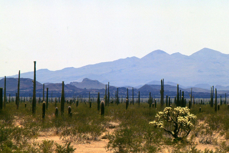 Biodiversidad del estado de Sonora