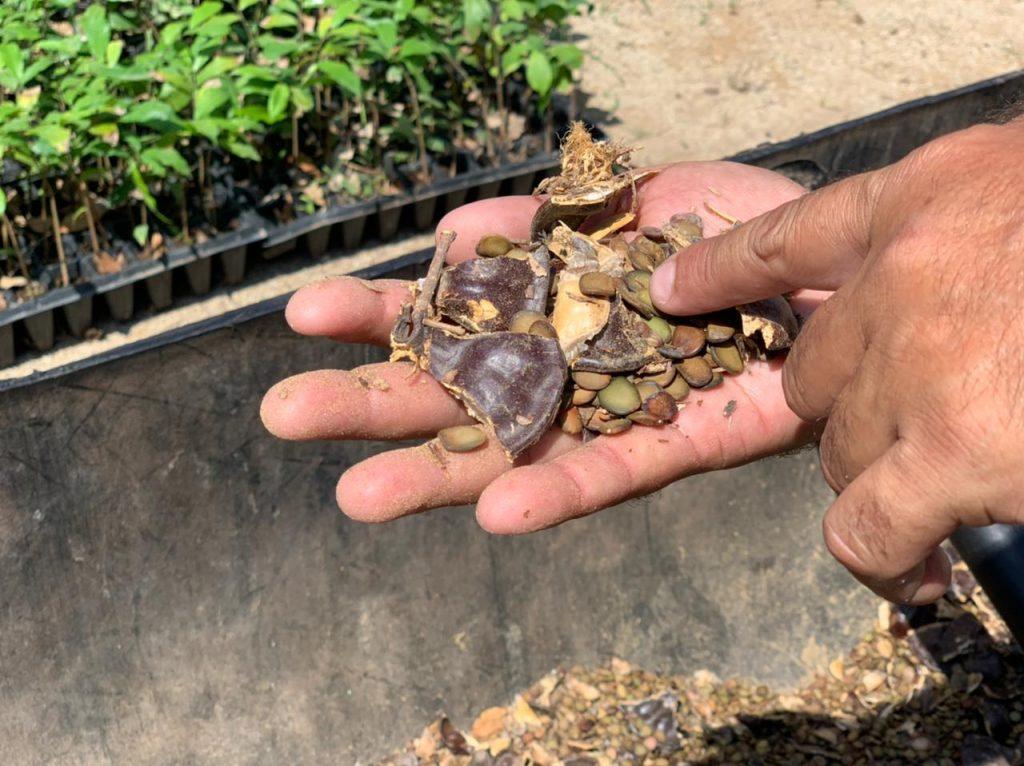 Bombardeo de Semillas en Sinaloa