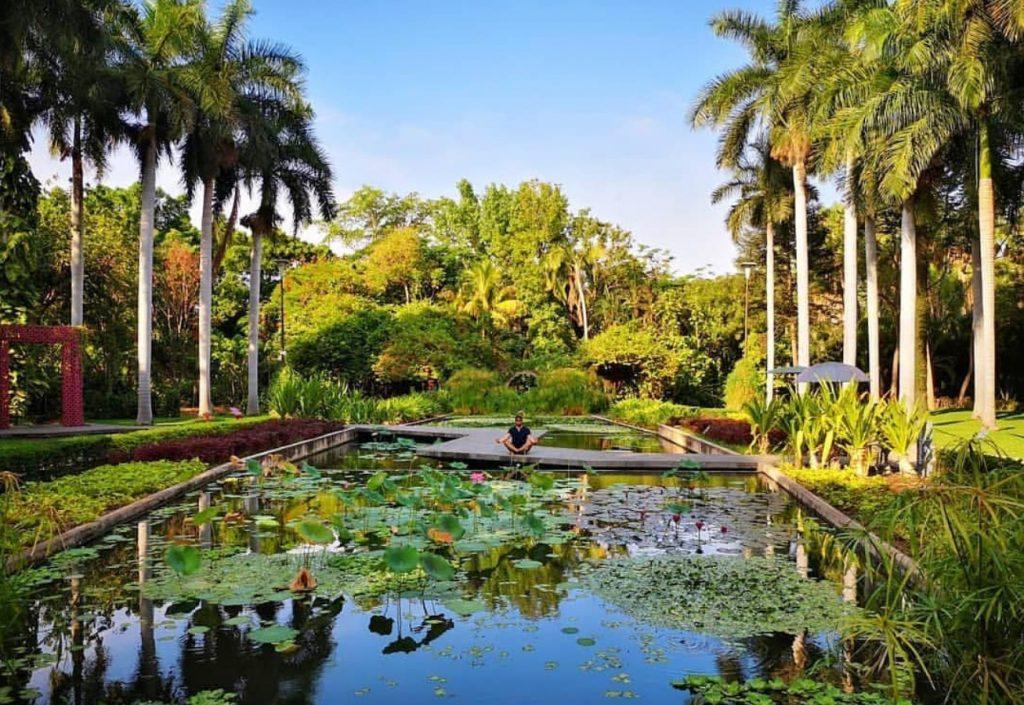 Meditación en el Jardín botánico
