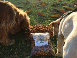 Perritos comiendo Snacks de Bolo Food