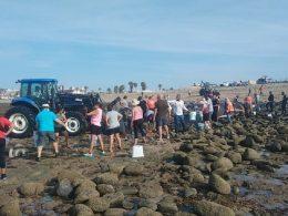 Proceso de rescate de ballena