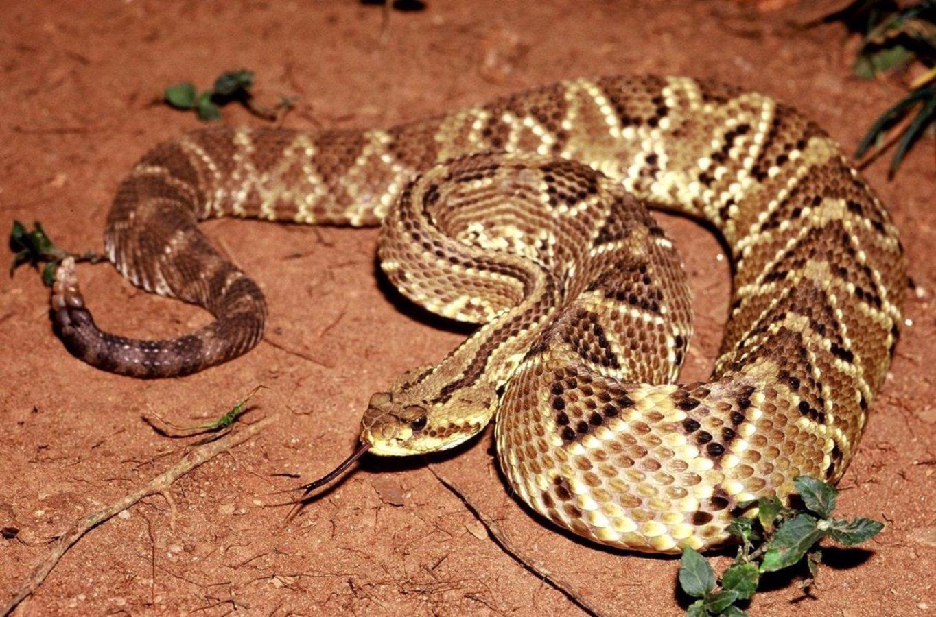 Serpiente en su hábitat
