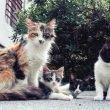 Gatos ferales