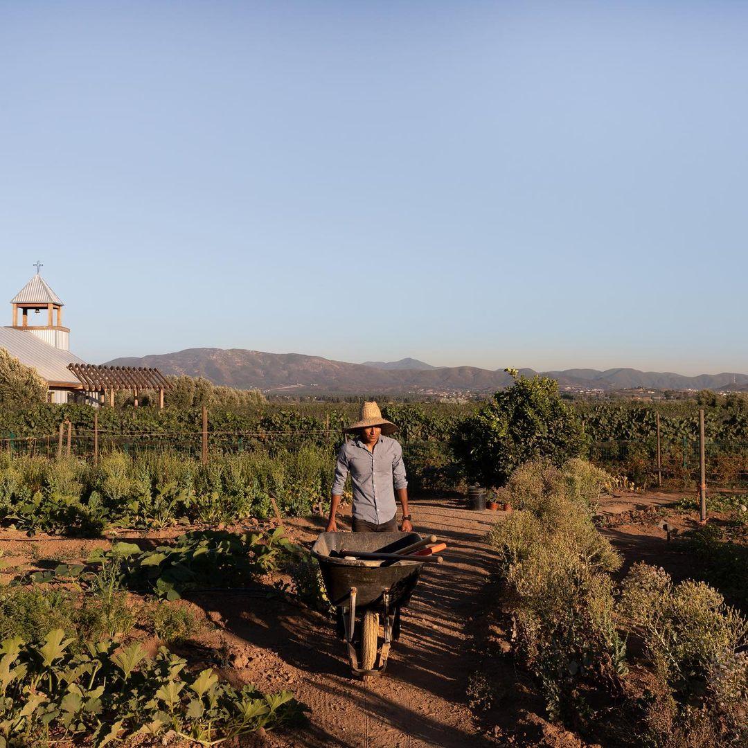 Agricultor en huerto de Finca La Carrodilla.
