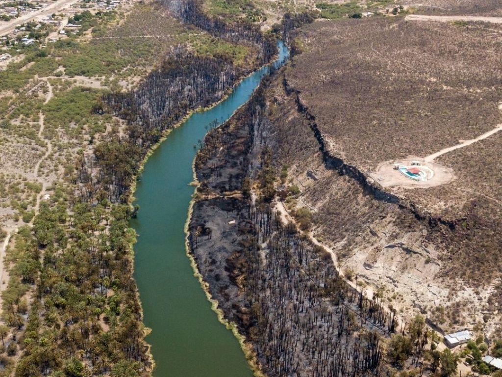 incendio forestal en el Oasis San Ignacio en Mulegé Baja California Sur