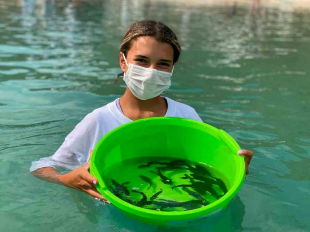 Liberan peces jóvenes de pez totoaba
