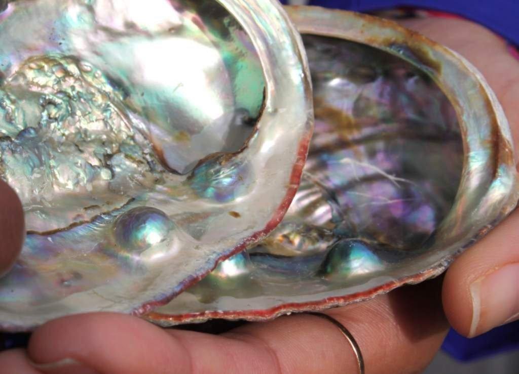 Perlas en moluscos