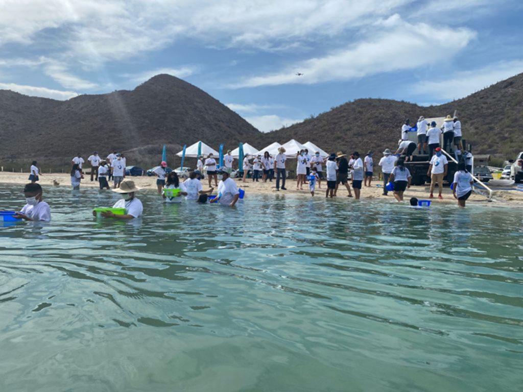 Liberan pez totoaba en BCS
