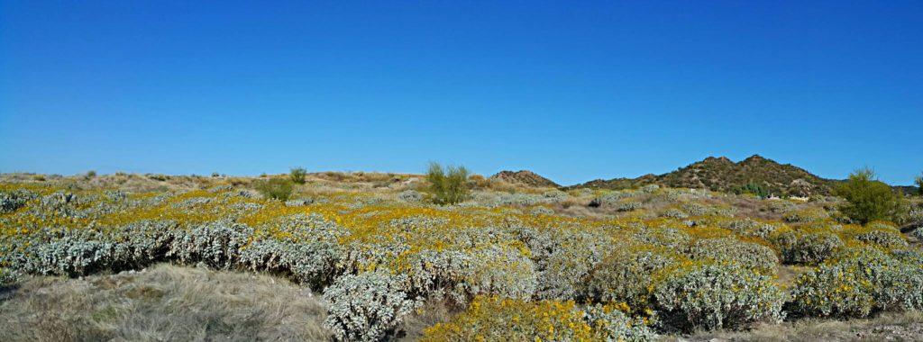 Cerro Johnson y su vegetación