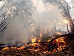 Incendio forestal en Sonora