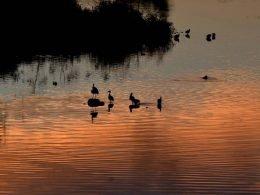 atardecer y patos en el estanque