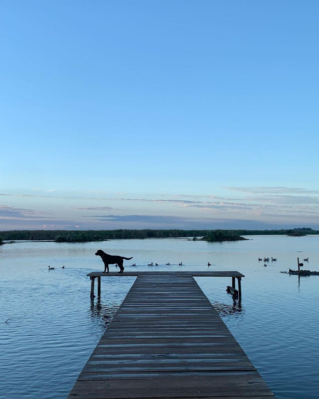 Muelle en Laguna de Chiricahueto.